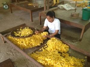 Sorting silk cocoons